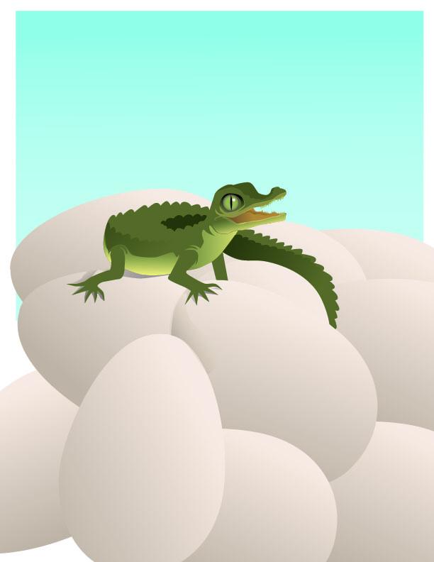 Crocs_TOZoo_babyCroc-01
