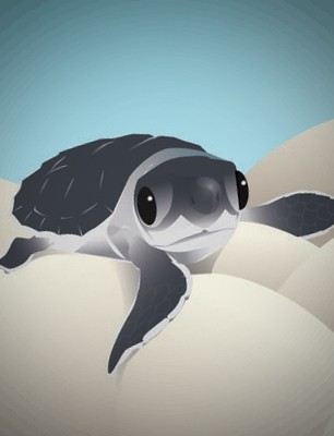 ZooIllustrations_featured image